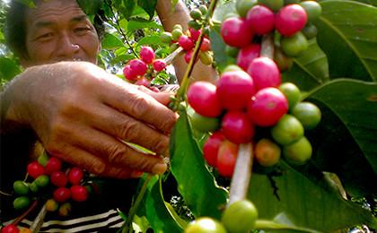 doicoffee goldenMandheling - 土居珈琲のコーヒー豆15種類を飲んだ正直な感想|評判や口コミを探している方へ