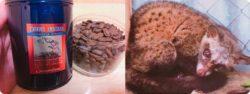 kopiluwak9 250x94 - 市販や通販で買える美味しいコーヒー豆と粉のおすすめランキング6選
