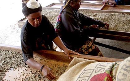 th da 014 image 02 - 土居珈琲のコーヒー豆「パプアニューギニア シグリ農園」正直な感想