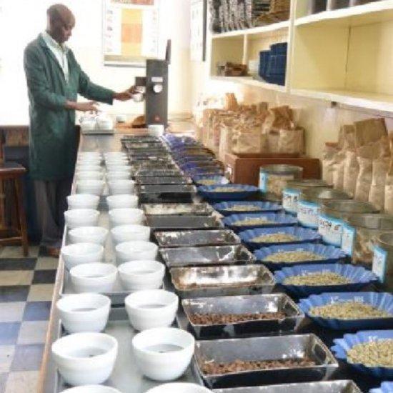 146420564 o5 - コーヒー豆通販レビュー|帷子珈琲ケニア キリニャガABキアンジルFW