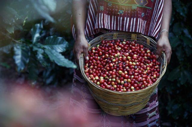 1a2b03af69d16d112aea7d08f5493d1f - コスタリカ産コーヒーの特徴|味や香り、おすすめコーヒー豆も紹介