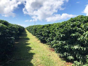 3950699 s 375x281 - コロンビアコーヒーの特徴|味や香り、おすすめコーヒー豆も紹介