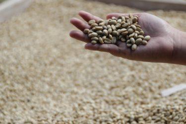 3ae2d4c2e95dae8e5409e83d28103515 375x250 - コロンビアコーヒーの特徴|味や香り、おすすめコーヒー豆も紹介