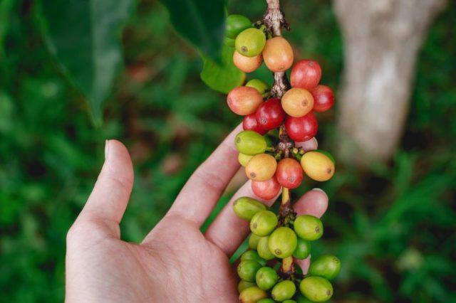 656503d30c0153942f9826a712da95f6 - コスタリカ産コーヒーの特徴|味や香り、おすすめコーヒー豆も紹介