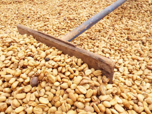 グアテマラ産コーヒーの精製方法