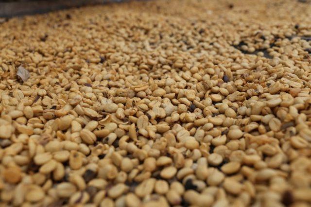 ホンジュラス産コーヒーの精製方法