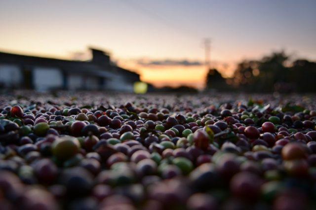 ホンジュラスにおけるコーヒー栽培の歴史