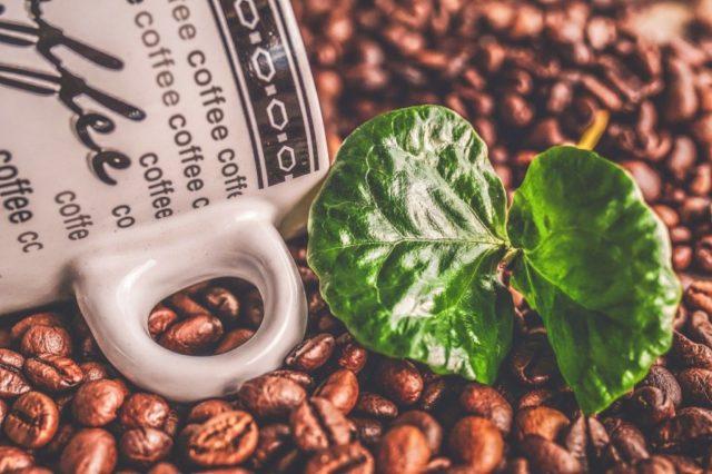 ウガンダ産コーヒー豆の栽培環境