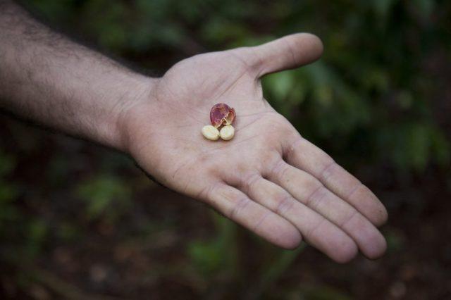 ボリビア産コーヒーの特徴
