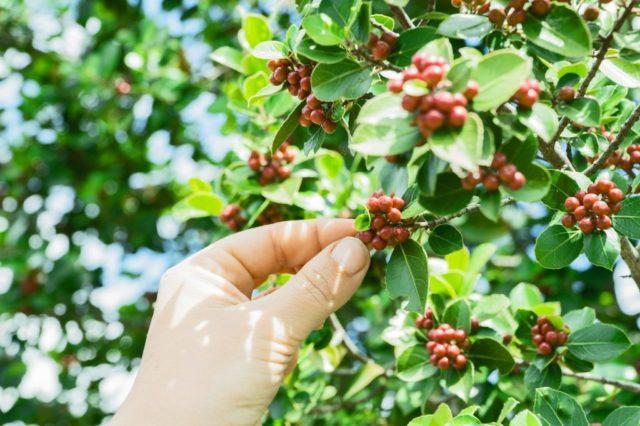 ニカラグア産コーヒー豆の生産状況