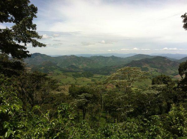 ニカラグアコーヒーの特徴 味や香り、おすすめコーヒー豆も紹介