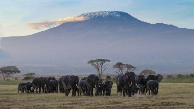 タンザニアの産地について
