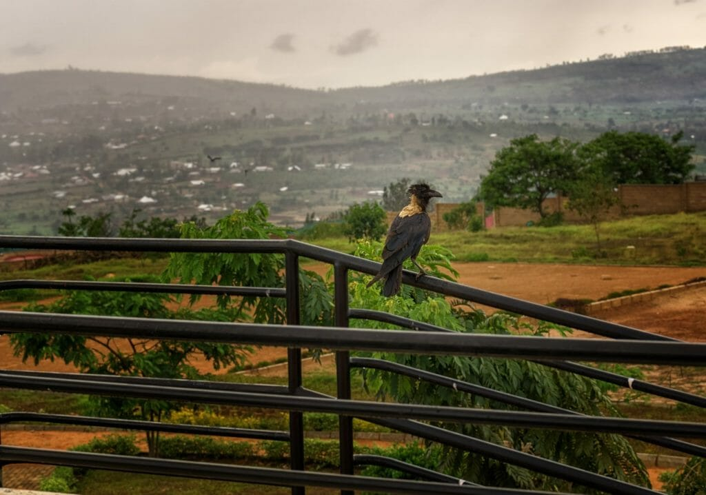 ルワンダ産コーヒー豆の産地