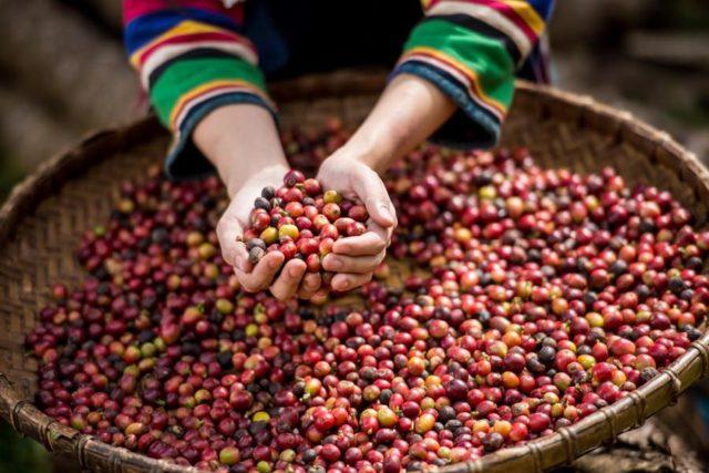 ミャンマーコーヒーの特徴|味や香り、おすすめコーヒー豆も紹介1