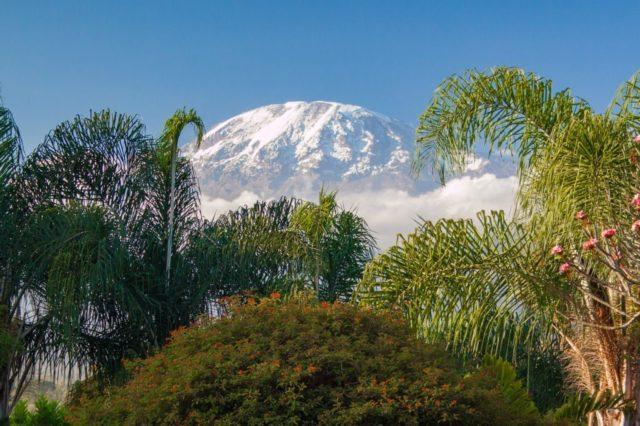 キリマンジャロの風景