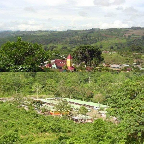 コスタリカ アキアレス農園