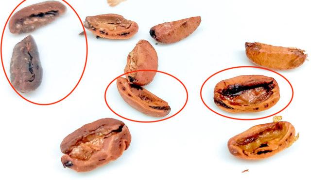 カルディ ケニアのカビ豆